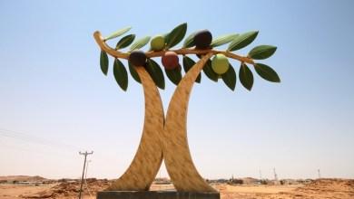 Photo of أكبر كمية أشجار زيتون بالعالم.. في هذه المدينة السعودية