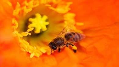 Photo of لماذا تتمتع ملكات النحل بذاكرة قوية؟