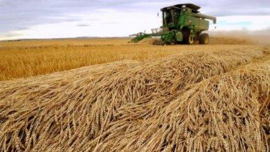 Photo of مؤسسة الحبوب السعودية تعلن إيقاف شراء القمح والشعير الكنديَّيْن