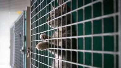 Photo of الأمن السعودي يقبض على معذب قطط في المدينة المنورة