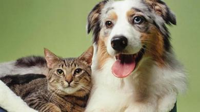Photo of احذر..7 أمراض تنقلها لك القطط والكلاب