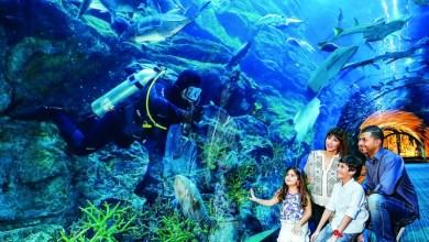 Photo of «دبي أكواريوم» السادس عالمياً في اختيارات المسافرين