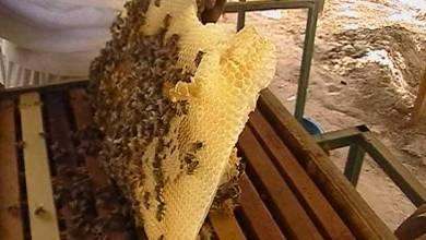Photo of التغير المناخي يضر بأعمال أصحاب مناحل العسل في الأردن