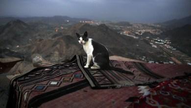 """Photo of فتوى سعودية بخصوص """"بيع القطط"""""""
