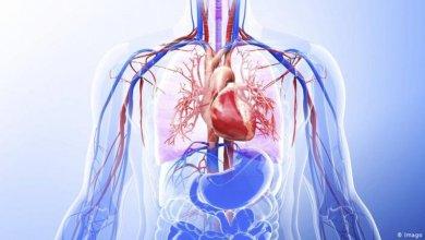 Photo of كيف يخلّص الصوم الجسم من السموم؟