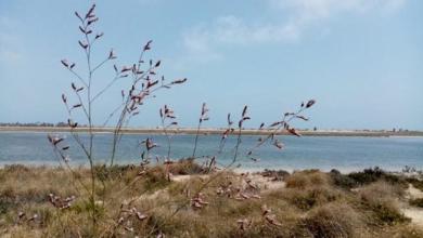 Photo of اكتشاف نبتة نادرة في جزيرة جربة… توجد فقط في تونس