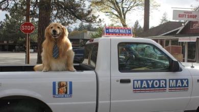 Photo of كيف أصبح هذا الكلب عمدة لبلدة أميركية؟ إليكم قصته