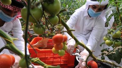 Photo of نجاح قطر في تحقيق اكتفاء غذائي ذاتي