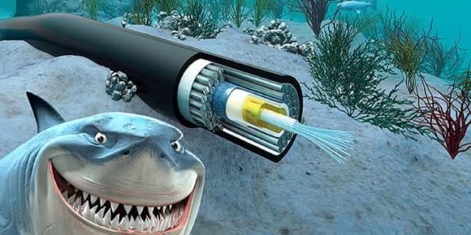 القرش والانترنت