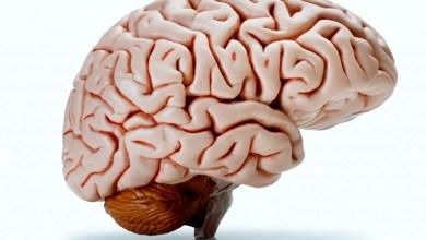Photo of علماء يخترعون جهازا لتطوير القدرات المعرفية للدماغ