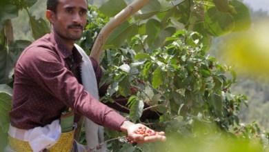 Photo of البن الأميركي.. هل يرفع معاناة اليمنيين مع الحوثيين؟