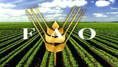 Photo of تقرير لمنظمة الفاو : انخفاض أسعار الغذاء عالميا لأدنى مستوى في عامين