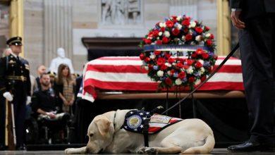 """Photo of كلب الرئيس الأسبق """"بوش الأب """" يجد وظيفة جديدة"""