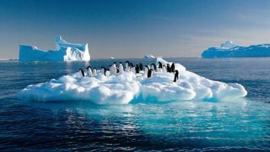 """Photo of """"مدافع الثلوج"""".. حل مقترح لمواجهة ذوبان القطب الجنوبي"""