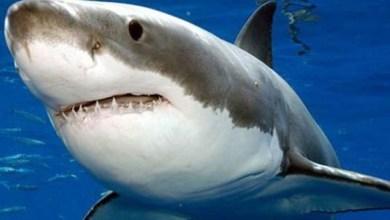 Photo of أسماك القرش تهدد حياة رواد شواطئ فلوريدا