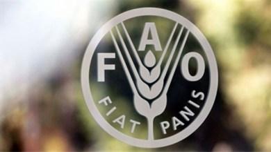 "Photo of ""الفاو"": تراجع أسعار الأغذية العالمية خلال يوليو الماضي"
