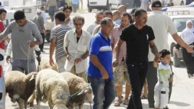 Photo of الأضحية طقس العيد الأهم في تونس رغم ارتفاع الأسعار