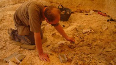 Photo of العثور على الجد الأكبر للآيفون في مقبره امرأة دُفنت منذ 2100 عام