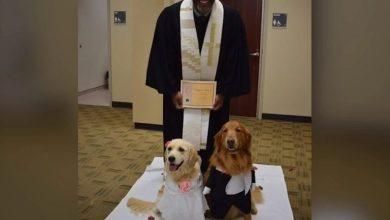 Photo of شاهد.. مراسم زواج كاملة لكلبين في أمريكا