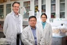 Photo of اكتشاف مضاد حيوي جديد لعلاج الخرف