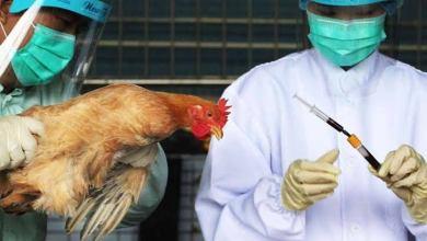 Photo of ظهور سلالة شديدة الخطورة من فيروس إنفلونزا الطيور فى الصين