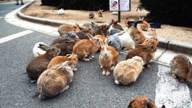 Photo of وباء فيروسي جديد يظهر في عدة ولايات ويفتك بالأرانب