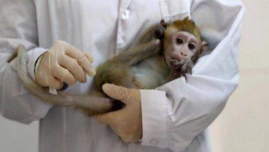 Photo of نجاح أول تجربة حيوانيّة للقاح صيني ضد كورونا
