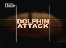 هجوم الدلفين