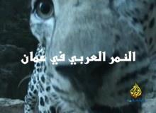 النمر العربي في عمان