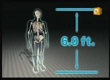 تحقيقات طبية : ساق للوقوف عليها