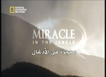 برنامج معجزة : معجزة في الأدغال