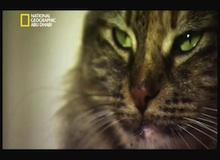مقتطف : أصول القطط