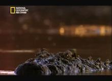 المصورون الجريئون - كمين التمساح