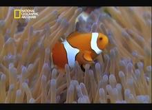 السمكة نجمة السينما : الصراع من أجل البقاء