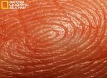 مختبرات الجرائم : بصمات الأصابع
