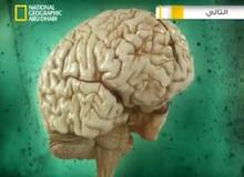 إختبر دماغك : أغرب من الخيال