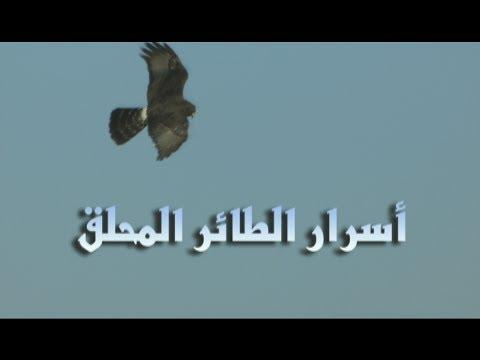 أسرار الكون : أسرار الطائر المحلق - موقع علوم العرب