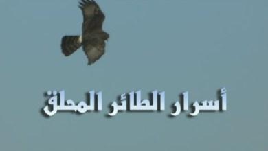 أسرار الطائر المحلق