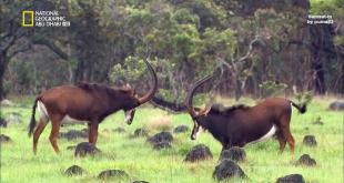 زامبيزي HD : مصدر الحياة