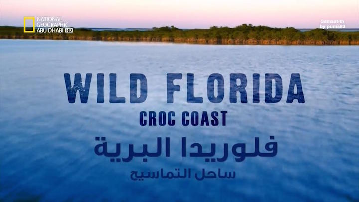 فلوريدا البرية HD : ساحل التماسيح - موقع علوم العرب