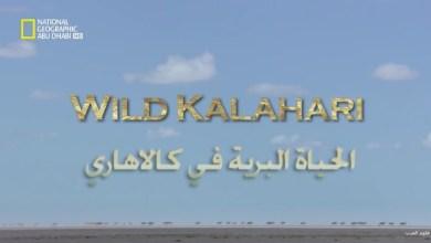 وجهات برية HD - الحياة البرية في كالاهاري