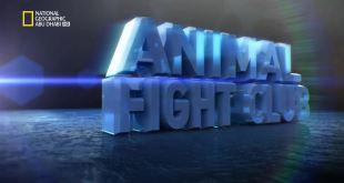 نادي قتال الحيوانات HD : عراك السهول