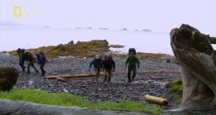 التشبث بالحياة في آلاسكا HD : مملكة الدببة