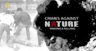 جرائم ضدّ الطبيعة HD : قتل الحيتان