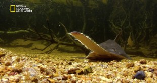 قوة الهجوم HD : عالم أسماك المنشار