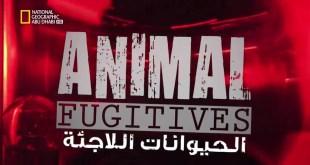 الحيوانات اللاجئة HD : هيجان الثور
