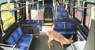 حيوانات باتت جامحة HD : صدمة و رعب