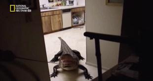 الحيوانات اللاجئة HD : تمساح الاقتحام