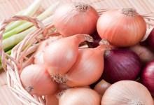 صورة مقال – منافع البصل الصحية تنسيك رائحته المنفرة