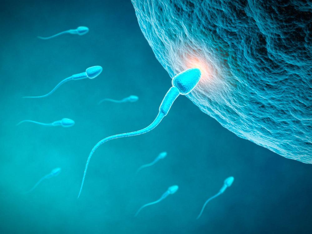 مقال - النافع و الضار لخصوبة الرجال